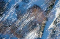 предыдущая зима в парке Стоковая Фотография
