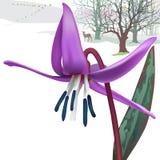 Предыдущая предпосылка весны с лилией форели или фиолетом Dogtooth Стоковые Изображения