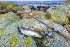 Предыдущая рыбная ловля форели моря весны Стоковые Изображения