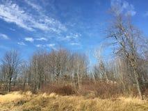 Предыдущая солнечность весны стоковое фото