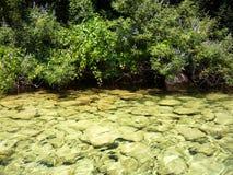 предыдущее лето берега утра озера стоковое изображение rf