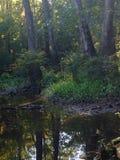 Предыдущее утро болота Стоковое Изображение RF