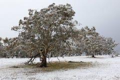 Предыдущие снежности сезона Стоковое Изображение RF