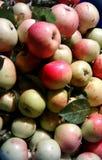 Предыдущие яблоки 1 Стоковые Изображения