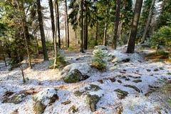 Предыдущий ландшафт зимы в Швеции стоковые изображения rf