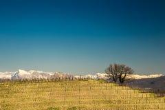предыдущий виноградник весны Стоковая Фотография