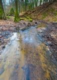 Предыдущий лес весны с малым ландшафтом потока стоковое изображение rf