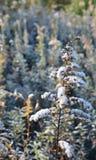 предыдущий заморозок Стоковое Фото