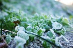 предыдущий заморозок Стоковые Фото