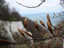 прибалтийская эстония около somethere tallinn моря Весна Стоковая Фотография