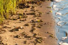 Прибой на реке Стоковые Фото