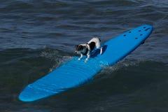 прибой doggie Стоковые Изображения RF