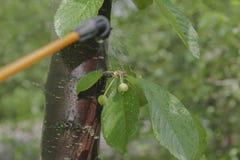 Прибор для распылять пестицид в саде Стоковое Изображение