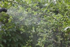 Прибор для распылять пестицид в саде Стоковое фото RF