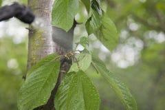 Прибор для распылять пестицид в саде Стоковое Фото
