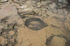 Прибрежная каменная поверхность с отверстиями во время отлива Стоковое фото RF