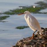 Прибрежная птица Стоковые Фото