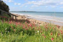 Прибрежная флора на foreshore австралийского пляжа стоковая фотография