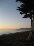 Прибрежные деревья на пляже на сумраке Стоковые Фото
