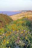 Прибрежные полевые цветки Стоковые Фотографии RF