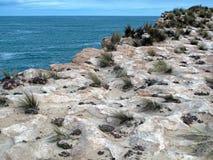 Прибрежные скалы стоковые изображения