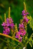Прибрежные цветки Стоковые Фотографии RF