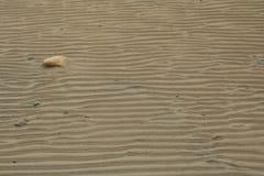 Прибрежный песок, живая природа северная Стоковая Фотография RF