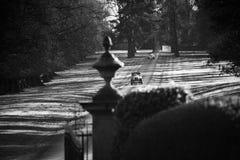Прибытие невест Стоковая Фотография