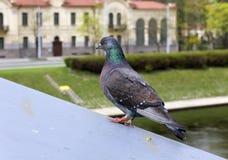 Прибыль птицы на крыше Стоковая Фотография