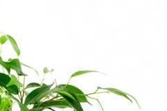 приветствие карточки флористическое Стоковые Изображения RF