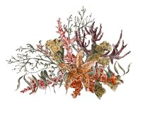 Приветствие морской жизни акварели затрапезного лета винтажное иллюстрация вектора