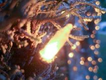 Приветствия сезона Стоковые Фотографии RF