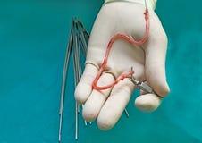Прививок вены Стоковая Фотография