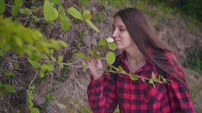 Привлекательная девушка в красной checkered рубашке Девушка идет вдоль дороги вдоль зеленых кустарников и вдохов цветок акции видеоматериалы