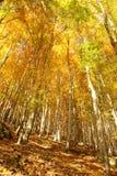 привлекательная женщина портрета наготы клена листьев заволакивания красотки осени Стоковые Изображения