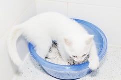 Привлекательность котенка туалета кота белая Стоковое Изображение