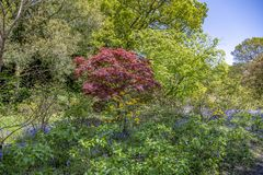 Привлекательно старомодный английский сад коттеджа весной с разнообразие заводами Стоковое Фото