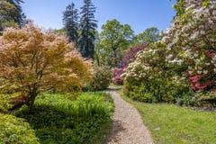 Привлекательно старомодный английский сад коттеджа весной с разнообразие заводами Стоковые Изображения RF