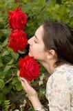 привлекательные розы Стоковое Изображение