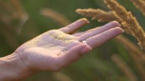 Привлекательные руки молодой женщины с золотыми яркими блесками в поле на заходе солнца движение медленное акции видеоматериалы