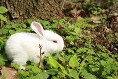 привлекательный кролик Стоковые Изображения RF