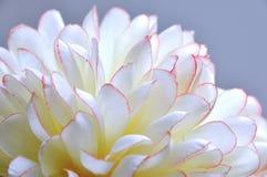 привлекательный макрос цветка ткани стоковая фотография