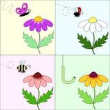 привлекательный цветок Стоковая Фотография