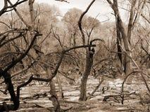 приводит к лесной пожар sepia Стоковые Фотографии RF