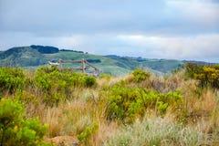Привод большой дороги океана сценарный Мельбурна Стоковая Фотография