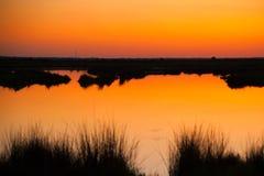 Привод живой природы черного пункта Стоковые Фото