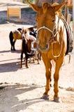 привязывать столба лошади унылый Стоковое Изображение RF