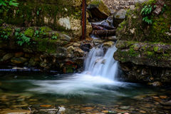 Привлекательный водопад и зеленый камень мха в лесе Стоковое Фото
