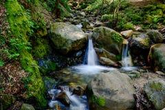 Привлекательный водопад и зеленый камень мха в лесе Стоковое фото RF