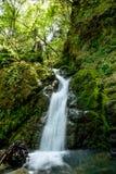 Привлекательный водопад и зеленый камень мха в лесе Стоковые Фото